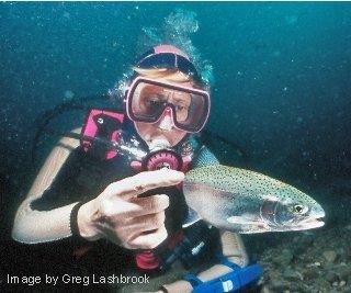 Scuba diver Kathy Johnson pets a rainbow trout underwater