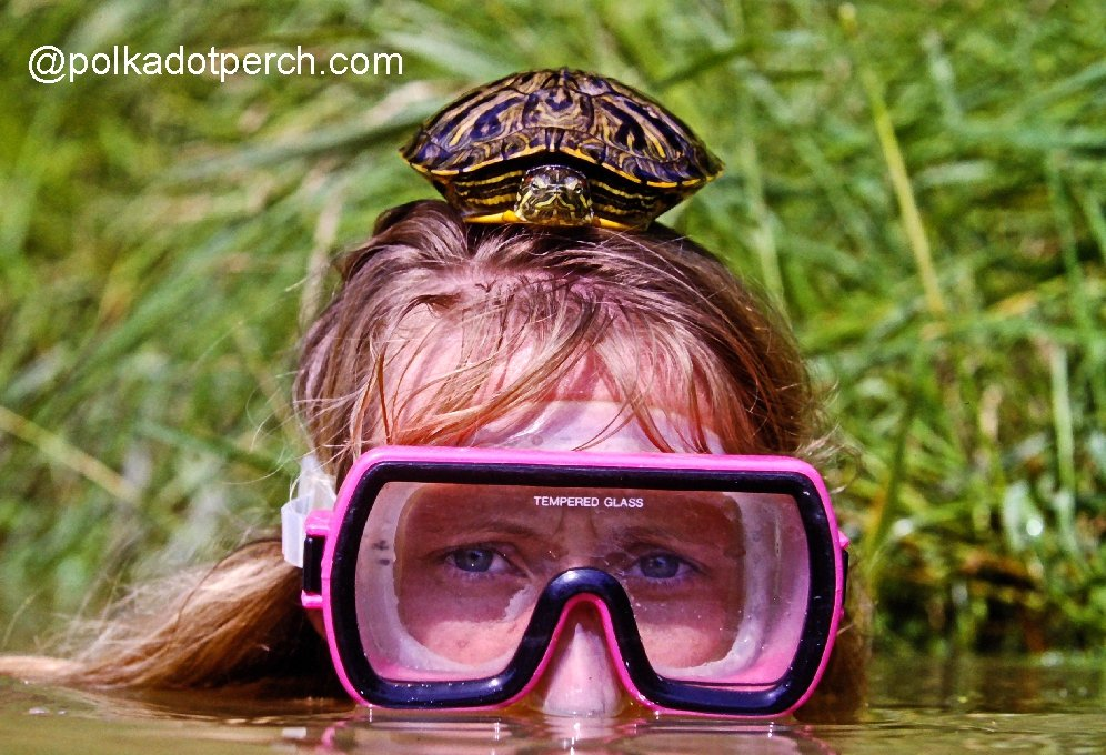 Head shot of Kathy Johnson in the water wearing a pink scuba mask with a turtle sitting on top of her head