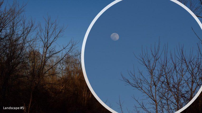 Full moon above a hardwood forrest